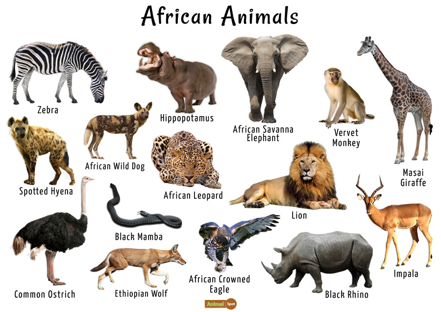 African Animals Images